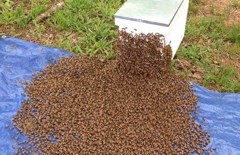 SMcNeely Swarm1