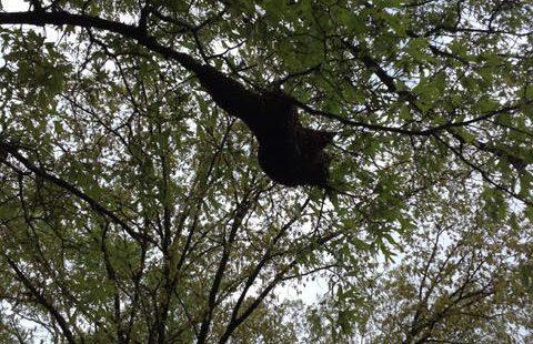 SMcNeely TreeSwarm