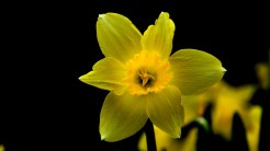 York Gardening gets you ready for Spring!