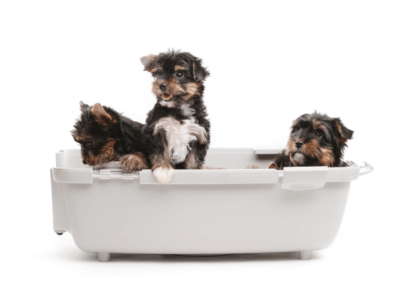How to potty train a puppy?