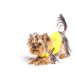 Coconut oil for Yorkshire terrier