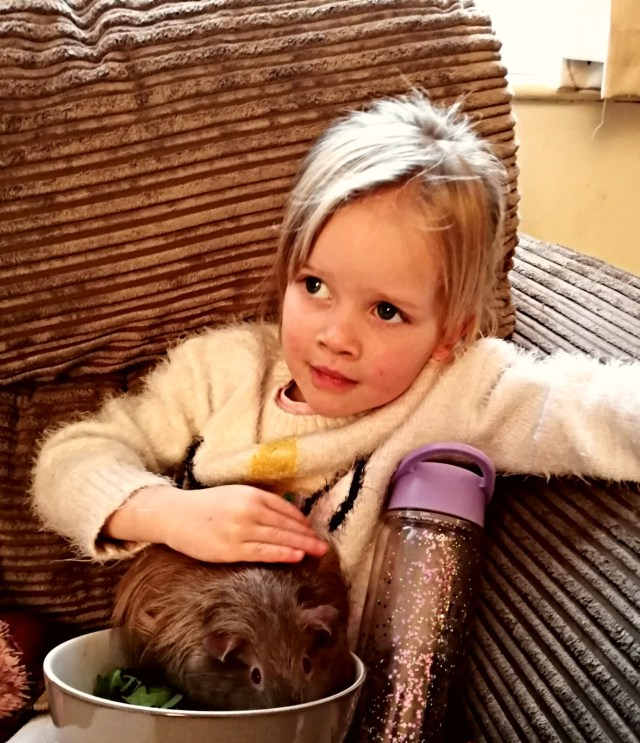 Ellie proving she can be responsible with a family pet. Our guinea pig Buttons.