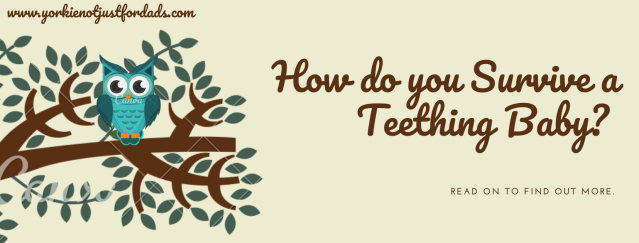 How do you survive a Teething Baby?