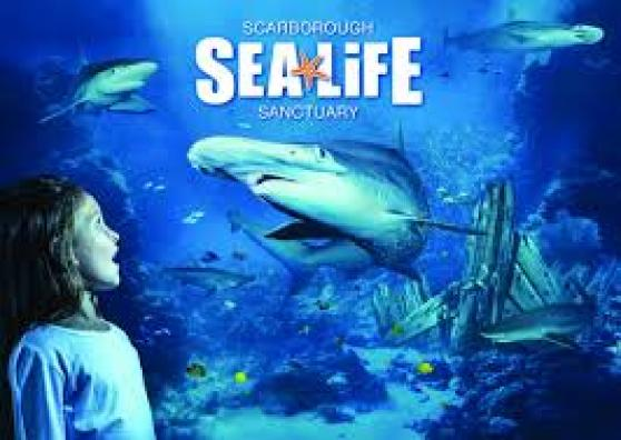 Sea Life Scarborough is another fantastic attraction which is highly worth a visit.