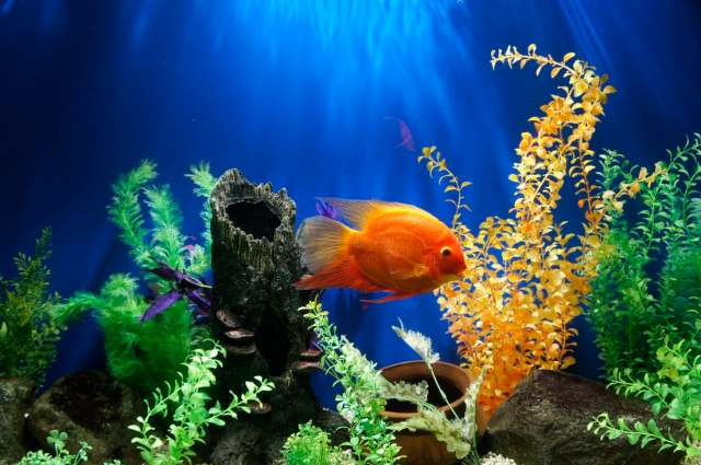 Fish are low maintenance and easy to care for which makes them a perfect family pet or a first time pet.