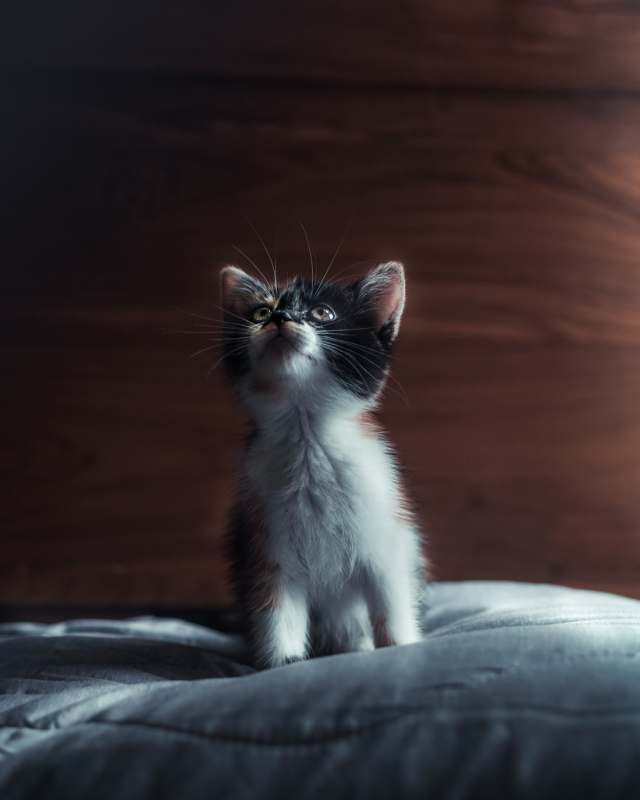 No doubt kittens are cute so whether you chose to get a kitten for your perfect family pet also consider you could rehome from a charity.