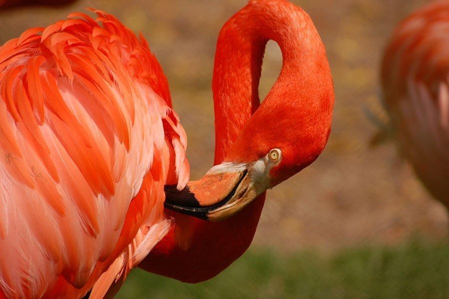 www flamingoland co uk