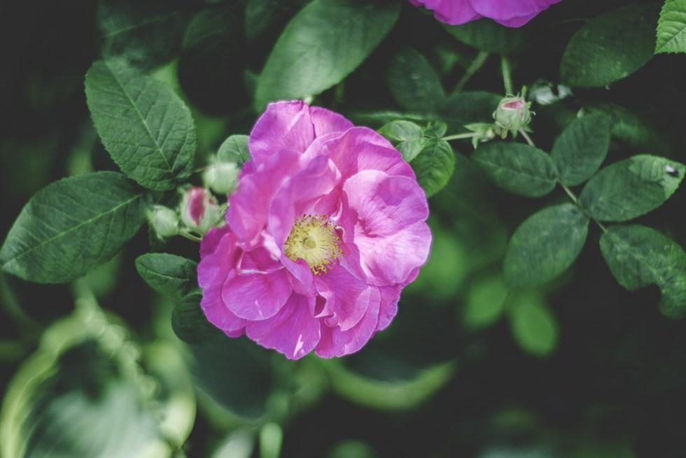 Garden Open Blog 5