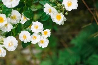 Flowers Skipton