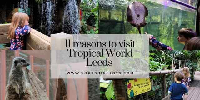 tropical world leeds indoor family fun