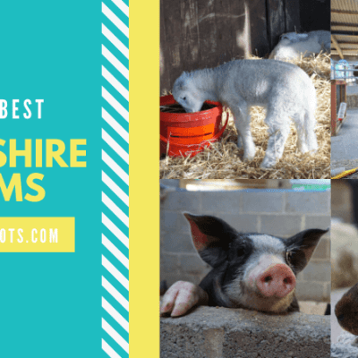 Yorkshire farms to visit with families
