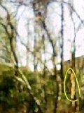 りすのいる木