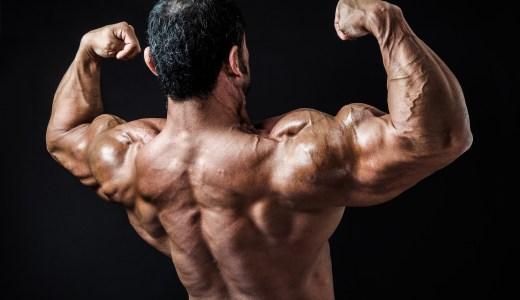 筋トレ初心者が知るべき解剖学。かっこいい体を作るための筋肉4選。