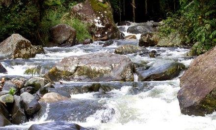 Participa de la décima jornada de revitalización y limpieza del río Pance
