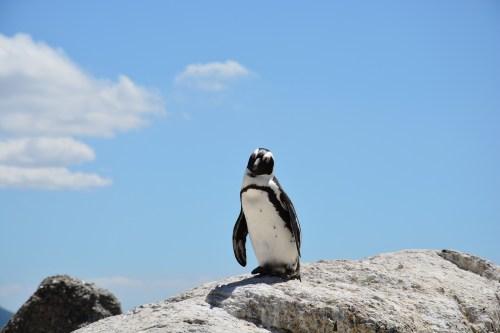 penguin-657527_1920