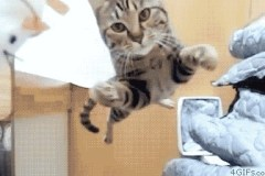 Funny & Kawaiiiiiiiiii!!! Kitties' gif animation.