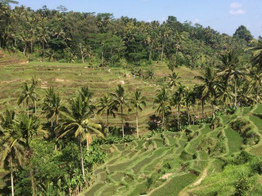 Tegalalang Rice Terraces in Ubud, Bali, Indonesia
