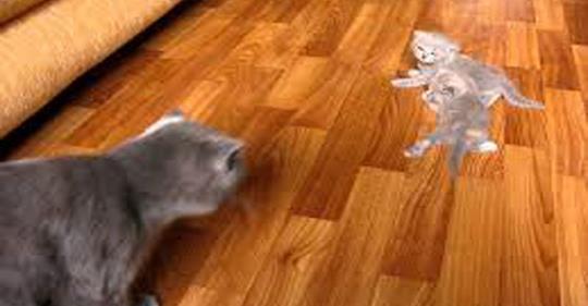 Котята учатся ходить. Трогательные кадры!