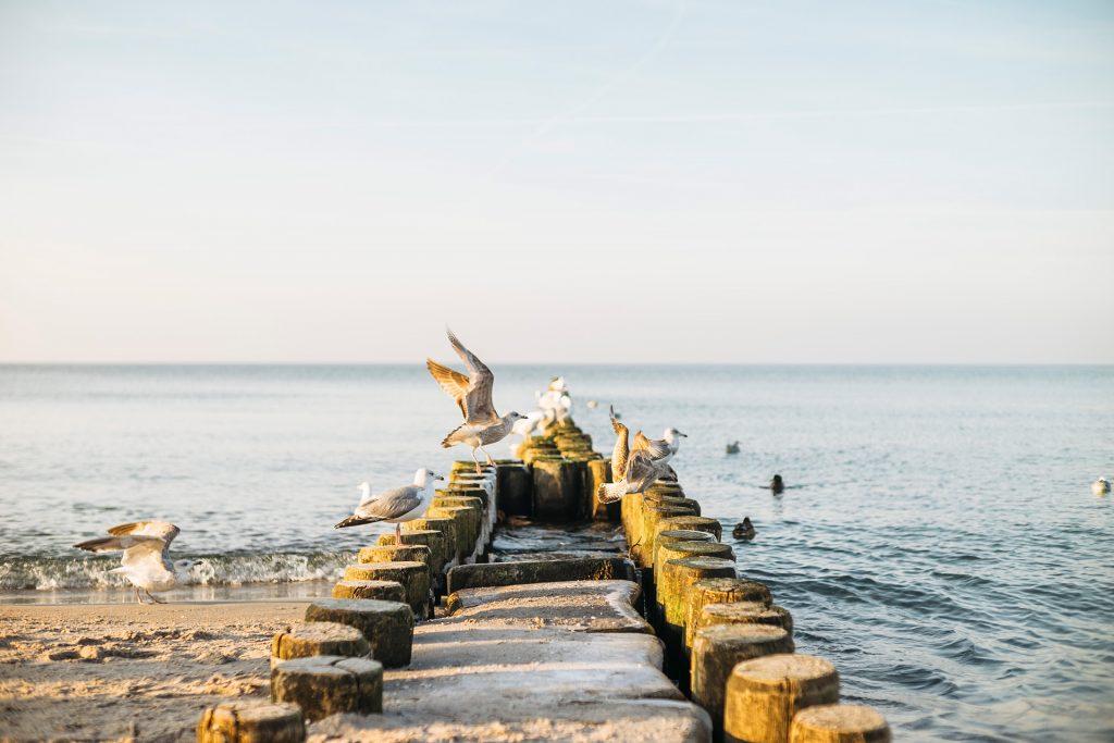 Möwen und Meer - You & I DIY