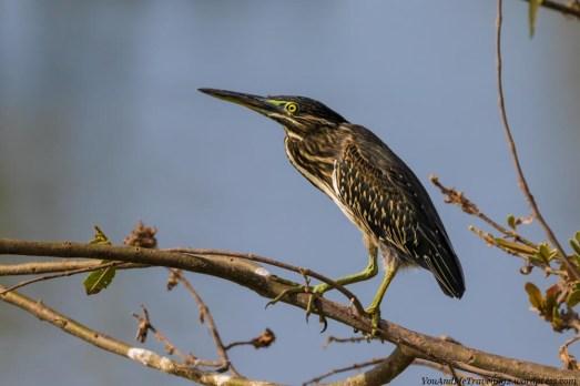 sri lanka wildlife bird