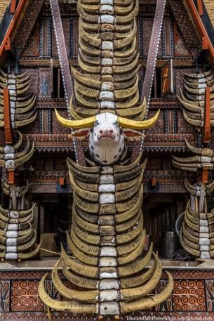 sulawesi toraja indonesia buffalo horns traditional house