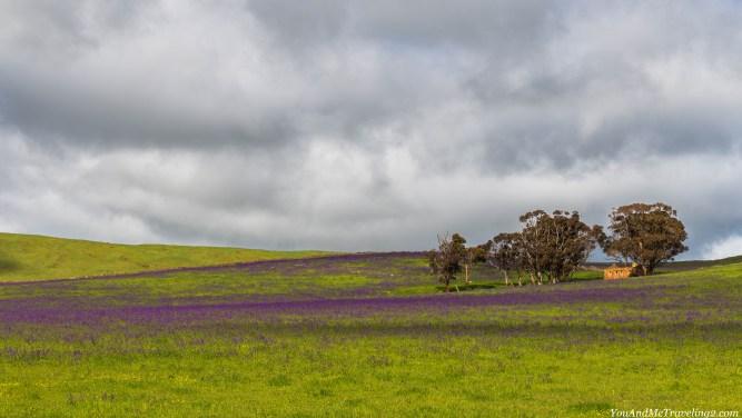 australia-flinders-ranges-6565