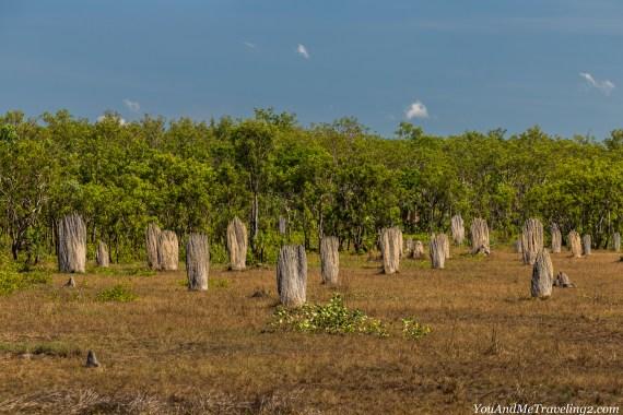 australia-northern-territory-litchfield-termite-mounds-5513
