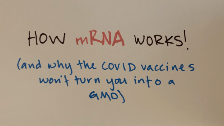 What are mRNA vaccines, and will they turn me into a GMO?