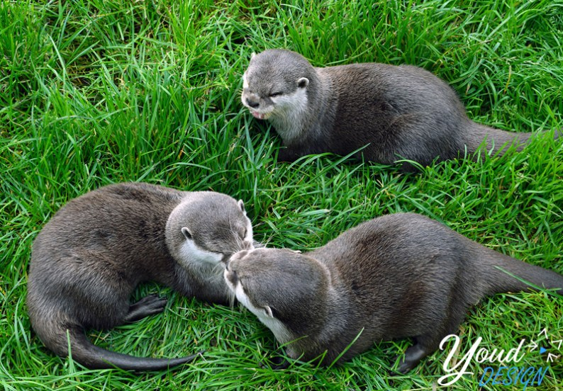 Otters at the Scottish Deer Centre