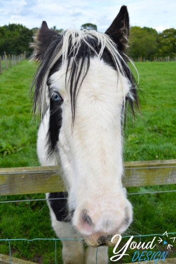 Blue Eyed horse - Northumberland Country Zoo