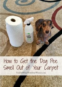best way to get dog urine smell out of carpet - Home The ...