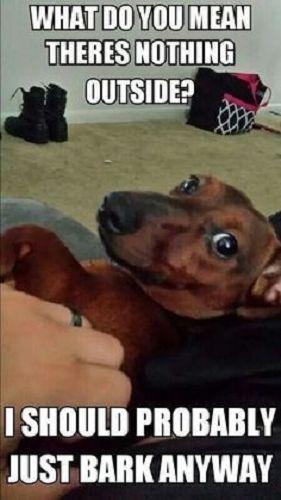 Weiner Dog Meme : weiner, Hilarious, Dachshund, Memes, Totally