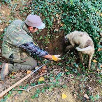 truffle hunting man and dog Tartufo Montepulciano