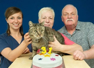 meet-nutmeg-the-oldest-cat-in-the-world-at-31-ydpmc-3