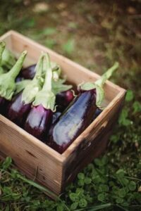 Fruits that start with E - Eggplant