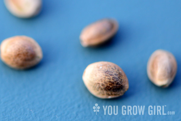 You Grow Girl - The Cannabis Diaries: Introduction