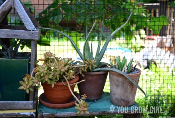 Houseplants Outdoors