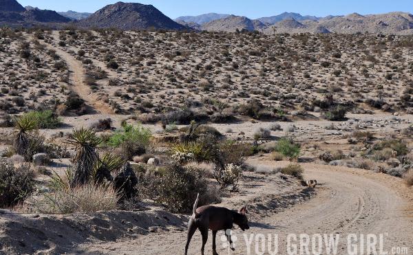 You Grow Girl - Mormon Tea (Ephedra)
