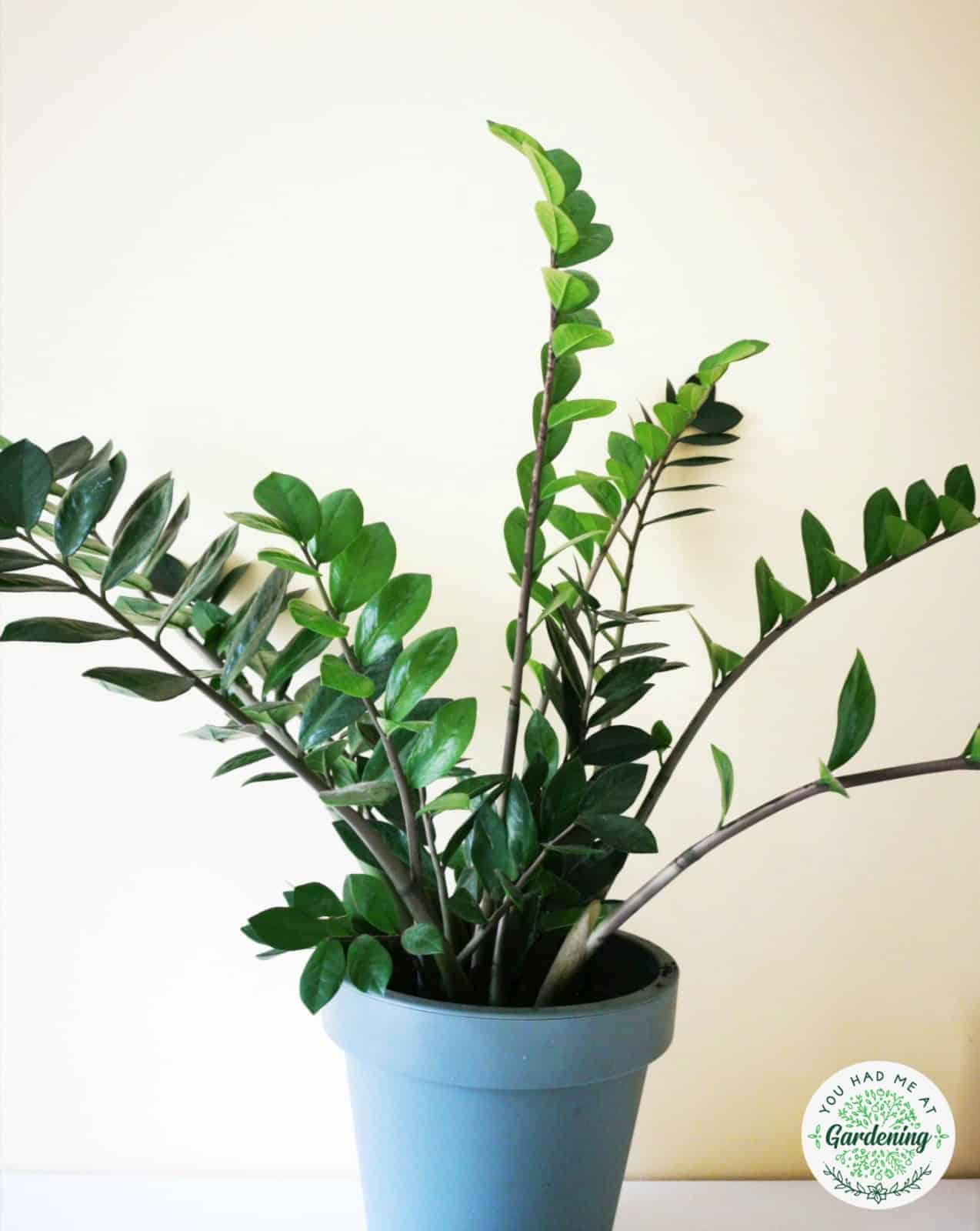 15 Best Common House Plants With Pictures Yhmag