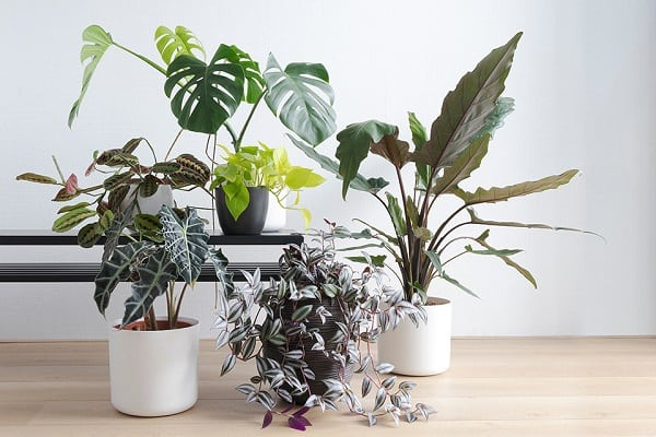 10 Large Indoor Plants To Grow This Year For All Skill Levels
