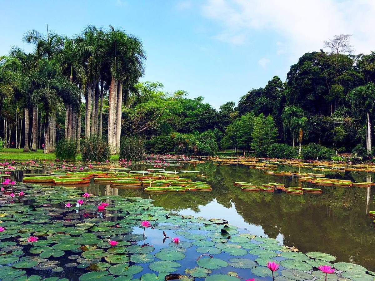西雙版納熱帶植物園 _排行榜大全