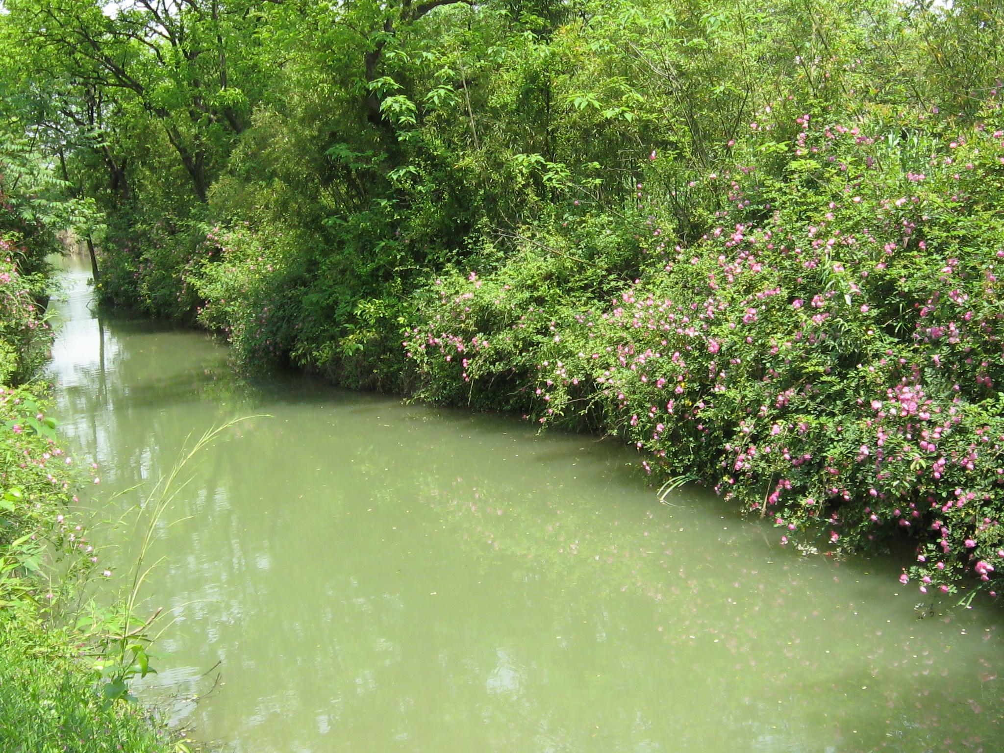 【攜程攻略】浙江西溪國家濕地公園景點.去過西溪濕地兩次。第一次是09年4月。《非誠勿擾》不僅火了北海道