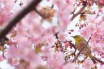 【緊急生放送決定!】FNS音楽特別番組「#春は必ず来る」放送日・ジャニーズ出演者・タイムテーブルは?