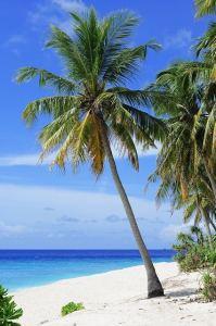Palm Tree on white sandy beach.