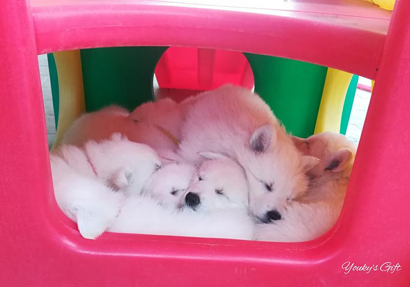 una montagna di cuccioli