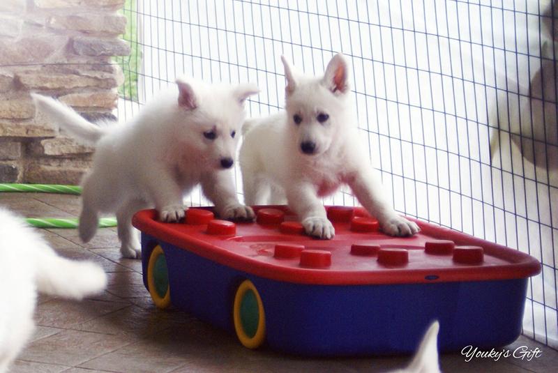 cuccioli in partenza