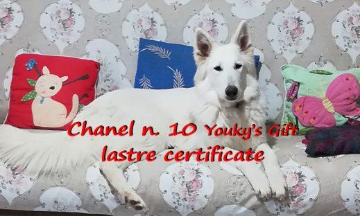 chanel n. 10 pastore svizzero bianco cuccioli youky's gift lastre