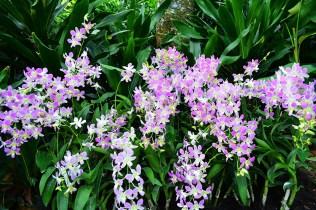 Singapore Botanic Gardens via youmademelikeyou.com