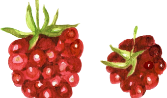 How to Clean And Freeze Raspberries