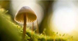 Imogen Heap's Mycelia